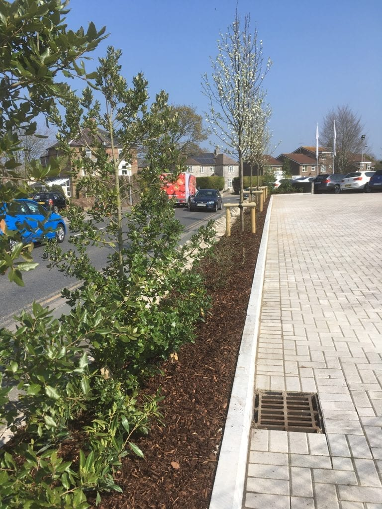 HEDGE & TREE PLANTING DORCHESTER DORSET