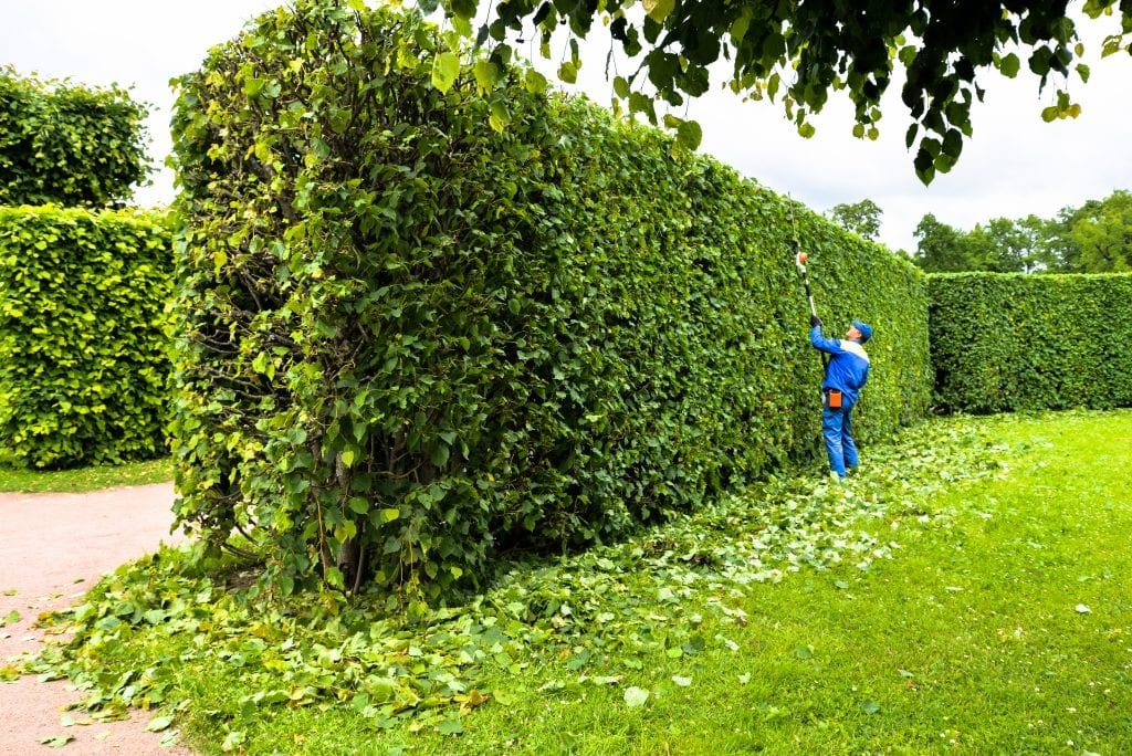 hedge_maintenance_dorchester_dorset